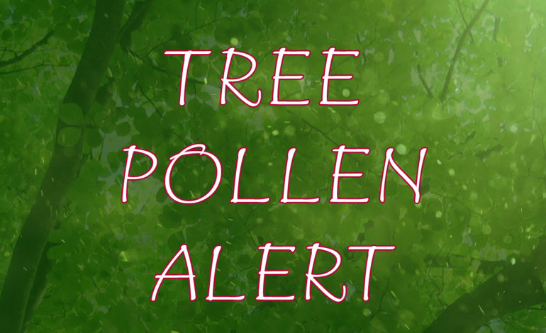 Tree Pollen Alert Very High Mulberry Oak Hackberry Family Allergy and Asthma Care in Denton Flower Mound Texas