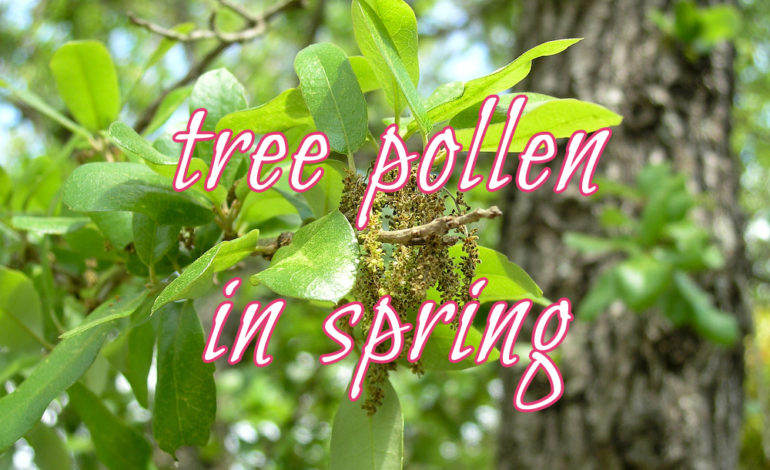 pollen counting station north texas Family Allergy & Asthma Care