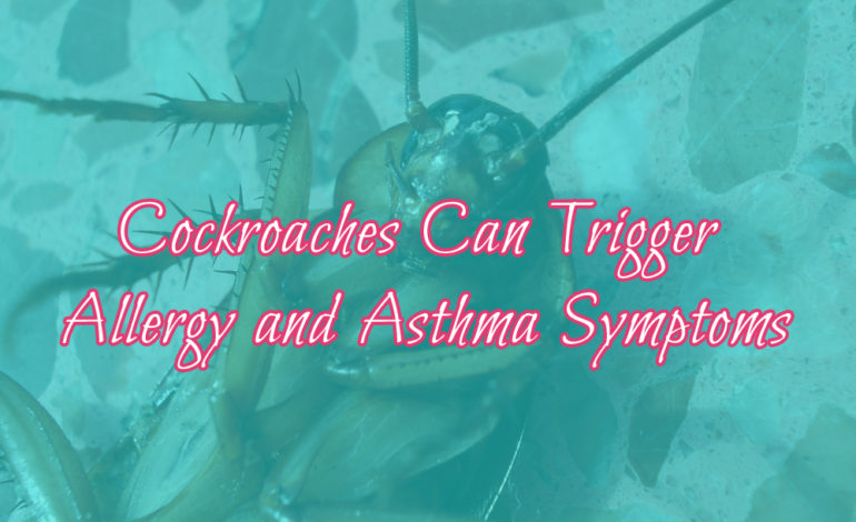 Cockroaches Allergy Asthma Allergies