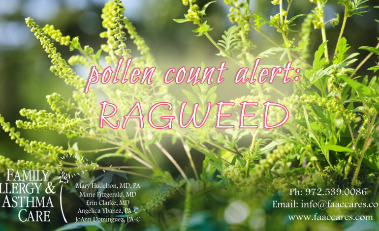 Ragweed Pollen Count Alert North Texas pollen counting station